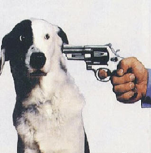 Shoot this dog